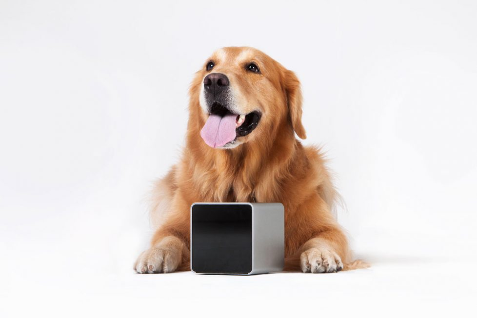 3 Tech Tools To Keep Your Dog Fit