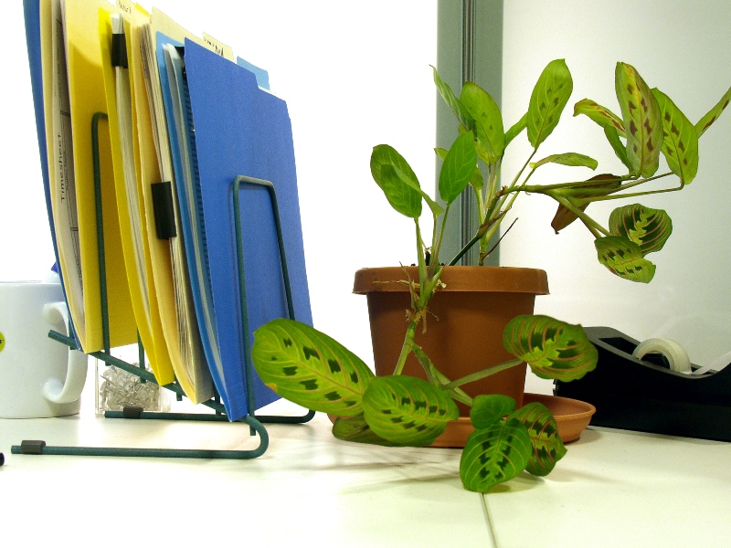 Energy Saving Essentials For The Office