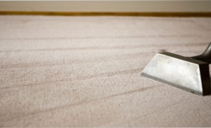 Dummies Guide To Keep Carpets Clean