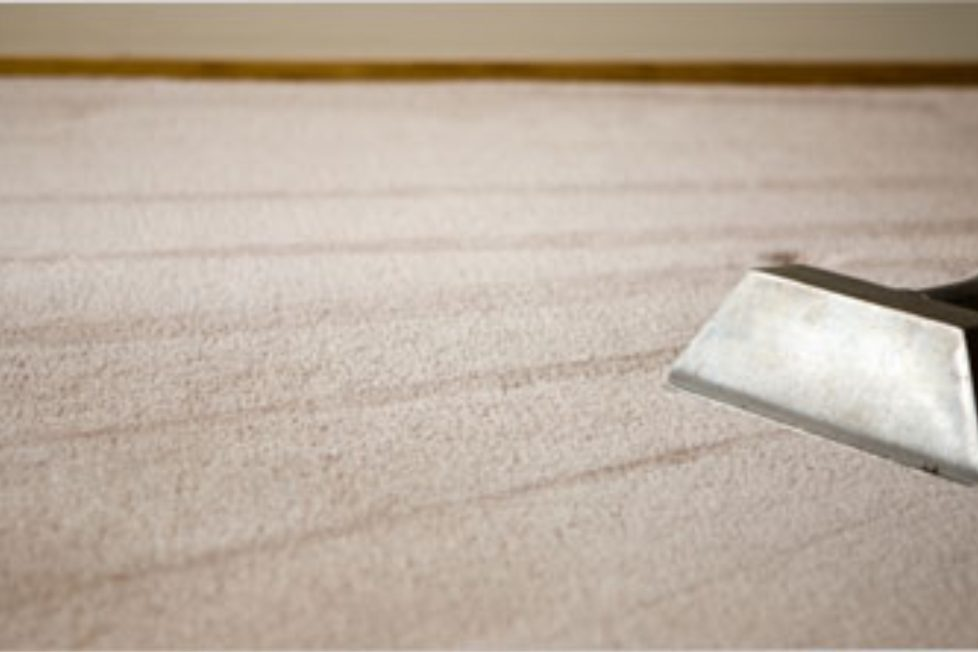 Dummies Guide To Keep Carpets Clean