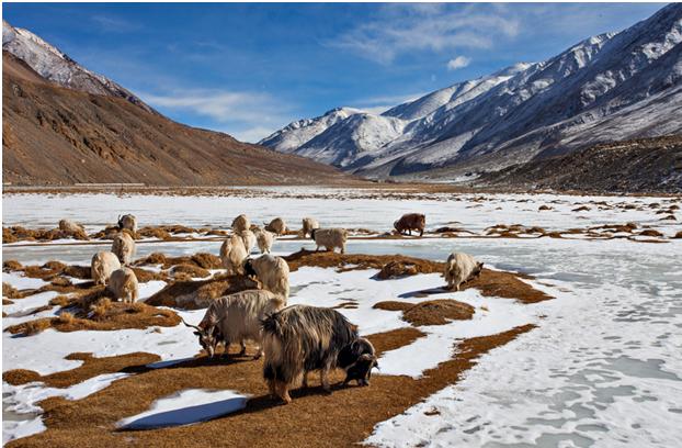 A Glimpse Of Leh Ladakh!