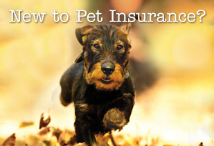 Dogs and Cats Need Insurance, Too