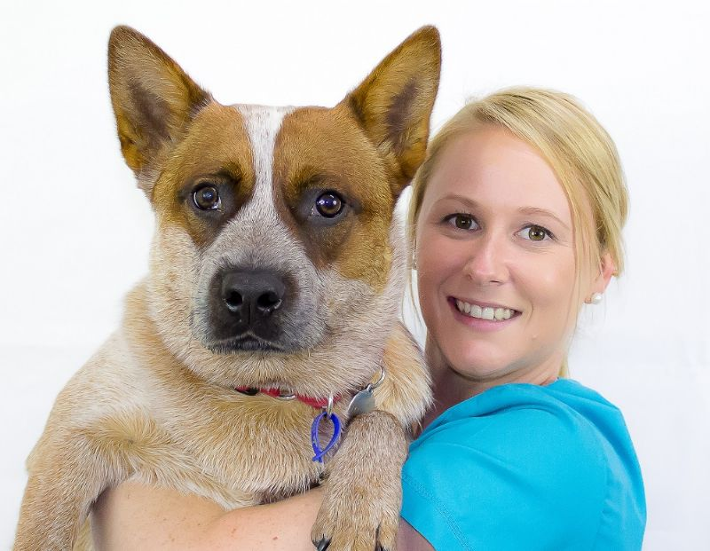 Digital Radiography Benefits For Your Veterinary Practice