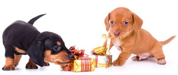 5 Reasons To Avoid Spoiling Your Dog With Gifts