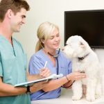 Factors To Consider While Hiring A Veterinarian For Your Pet