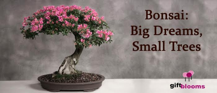 Go Green With Sending Harmony Bonsai Plant