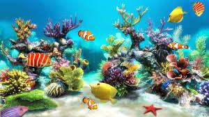 Simple Guide To Maintain A 75 Gallon Aquarium