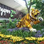 Top Tourist Attraction Sites To See In Singapore