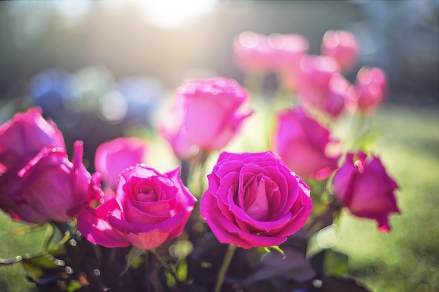 Enticing Ways Of Gifting Flowers To Your Valentine