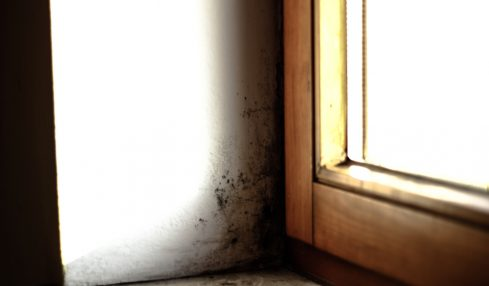 How To Keep Mold Away from Your Attic